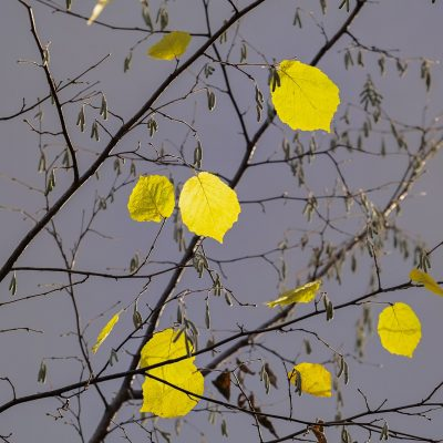 autunno_yellow-leaves