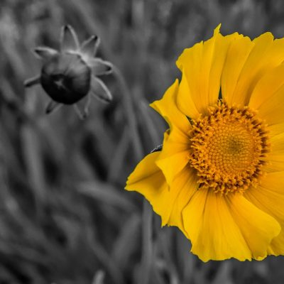flower-5053633_1280